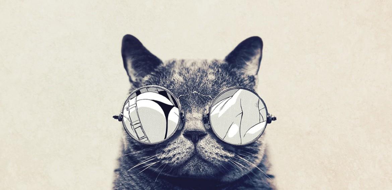 gatos con gafas