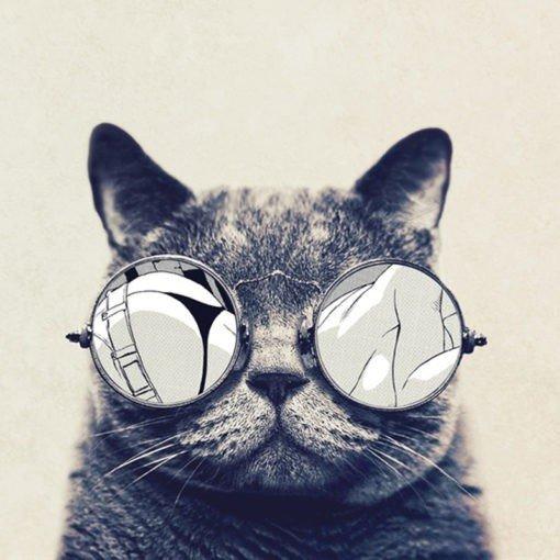 catstacam gatos whiskas 2 510x510 - Nuestro blog