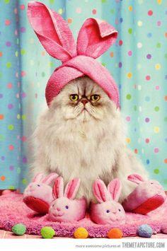 gato con disfraz de pascua