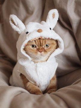 easter cat - La Semana Santa y los huevos de Pascua, una tradición muy dulce